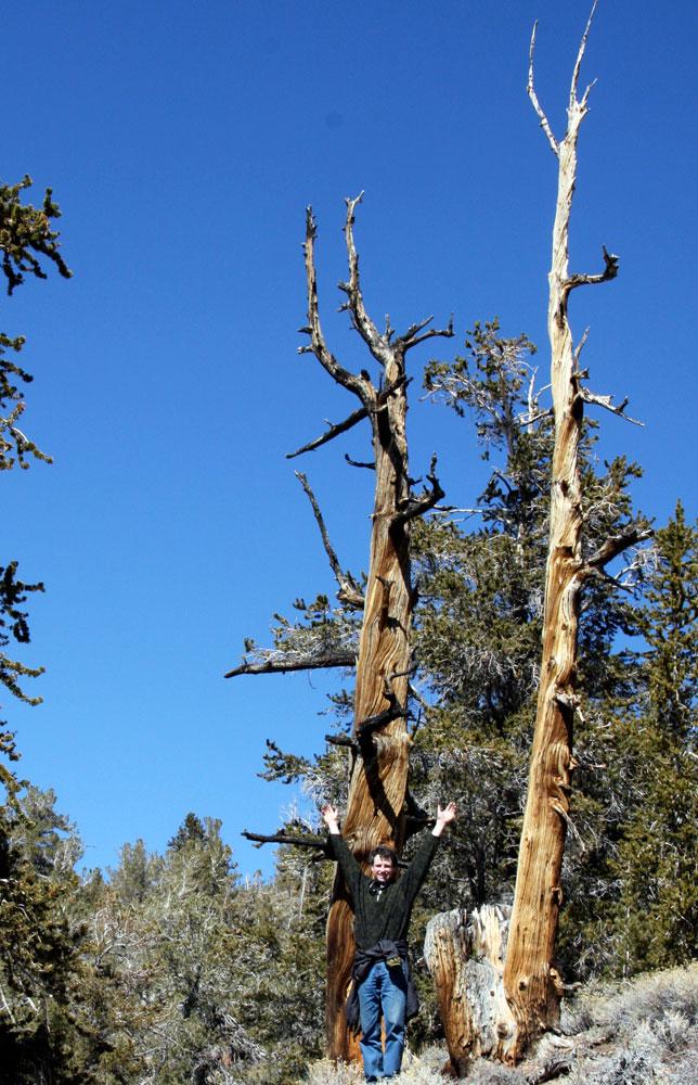Snag trees