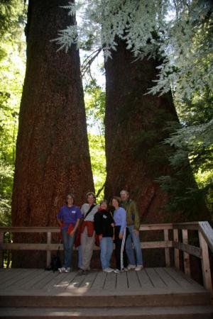 Family in the Redwoods